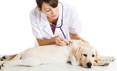 AGA488_3: Asistencia a la atención clínica en centros veterinarios
