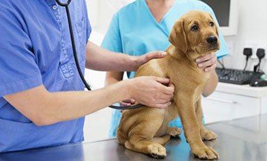 Curso de Consulta clínica veterinaria (MF1587_3) online